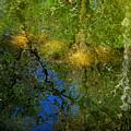 Sunlight Through Trees by Donna Blackhall