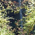 Sunlite Silver Falls by Thomas J Herring