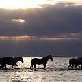 Sunrise Horses by Carol Walker