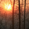Sunrise In A Foggy Wood by James Jones