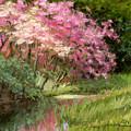 Sun's Grace by L Diane Johnson