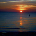 Sunset Bird by Russ Mullen