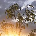 Sunset Leaves 2 by Padamvir Singh
