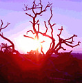 Sunset Through Silhouetted Tree In Desert 2 by Steve Ohlsen