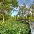 Swamp Garden Magnolia Plantation by Dustin K Ryan