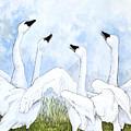 Swan Dance by Virginia McLaren
