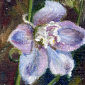 Sweet Bloom Aceo by Brenda Thour
