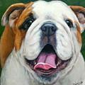Sweet Little English Bulldog by Dottie Dracos