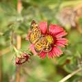 sweet Nectar by ShadowWalker RavenEyes Dibler