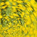 Swirling Flowers by Bob Coates