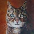 Tabby Cat by Julie Dalton Gourgues