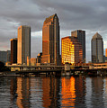 Tampa In Reflection by David Lee Thompson