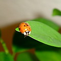 Tattered Ladybug by Dani Marie