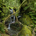 Temperate Rain Forest Waterfall by Stephen  Thompson