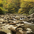 Tennessee Autumn Stream 6059 by Michael Peychich