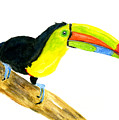 Terry Toucan by Rich Stedman