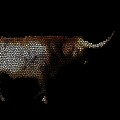 Texas Longhorn by Kim Henderson