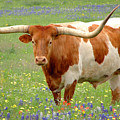 Texas Longhorn Standing In Bluebonnets by Jon Holiday