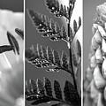 Texture Triptych by Lisa Knechtel