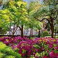 The Azaleas Of Savannah by David Lloyd Glover