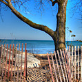 The Beach by Laura Kinker