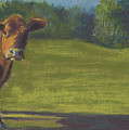 The Belted Cow by Terri  Meyer