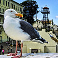 The Bird Of Alcatraz by Nigel Fletcher-Jones