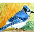 The Blue Jay by Asha Sudhaker Shenoy