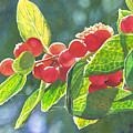 The Bush With The Red Berries by Catherine G McElroy