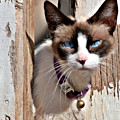 The Cat A Purrfect Carnivore by Christine Till