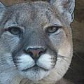 The Cougar 3 by Ernie Echols
