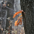 The End Of Fall by Trish Tritz