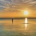 The Fisherman by David Hibberd