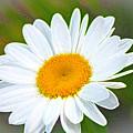 The Friendliest Flower by Barbara Dean