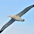 The Greatest Seabird by Tony Beck