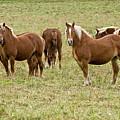 The Herd by Michael Cummings
