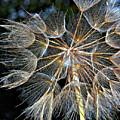 The Inner Weed by Steve Harrington