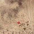The Last Blossom by Rachel Christine Nowicki