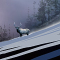 The Magnificent Elk by Paul Sachtleben