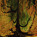 The Melting Tree by Lori Tambakis