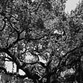 The Monastery Tree by Rob Hans