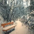 The Orange Bench by Tara Turner