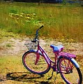 The Pink Bike by Donna Bentley