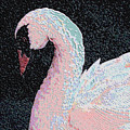 The Pink Swan by Rosalie Scanlon