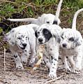 The Puppy's Prize by Scott Hansen