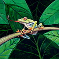 The Red Eyed Tree Frog by Elizabeth Robinette Tyndall