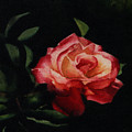 The Rose by Patricia Halstead