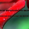 The Rose Speaks Of Love by Irma BACKELANT GALLERIES