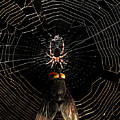 The Spider  And The Fly by Wingsdomain Art and Photography