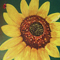 The Sunflower In Our Garden by Dee Conroy